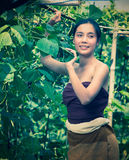 Asia beautiful woman and basket  harvesting containing zucchini Royalty Free Stock Image
