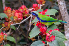 Asia bird Stock Image