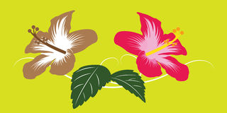 Asia Bloom Flower and Green Leaf Vector Stock Image