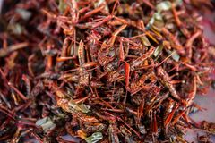 Asia, Cambodia, Fried, Insect, Bazaar Market royalty free stock images