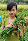 Asia children, rice field. SOC TRANG, VIET NAM- MAR 23: Unidentified Asia children playing on rice field, Vietnamese kid hold sheaf of paddy on hand, stand with royalty free stock photos