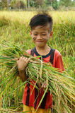 Asia children, rice field. SOC TRANG, VIET NAM- MAR 23: Unidentified Asia children playing on rice field, Vietnamese kid hold sheaf of paddy on hand, stand with stock photos