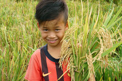Asia children, rice field. SOC TRANG, VIET NAM- MAR 23: Unidentified Asia children playing on rice field, Vietnamese kid hold sheaf of paddy on hand, stand with royalty free stock photo