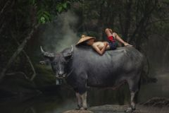 Asia children sleeping on water buffalo. Asia children sleeping on water buffalo at rural.Thailand royalty free stock images