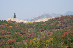 Asia China, Beijing, badaling national forest park, the Great Wall, red leaves Royalty Free Stock Image