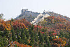 Asia China, Beijing, badaling national forest park, the Great Wall, red leaves Royalty Free Stock Photography