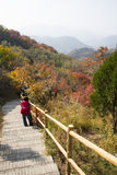 Asia, China, Beijing, Badaling National Forest Park, Mountain climbing, the steps Royalty Free Stock Images