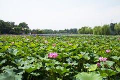 Asia China, Beijing, Beihai Park, The lotus pond, stone bridge Stock Photography