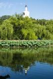Asia China, Beijing, Beihai Park,Summer landscape,Lotus pond, the white pagoda Royalty Free Stock Image