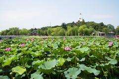 Asia China, Beijing, Beihai Park, The white pagoda,The lotus pond, Stock Images