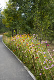 In Asia, China, Beijing, Chaoyang Park, bamboo fence, flowers, Zinnia, Cosmos Stock Image
