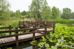 Asia China, Beijing, Chaoyang Park, garden landscape,The wooden bridge, lotus pond Royalty Free Stock Image
