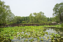Asia China, Beijing, Chaoyang Park, garden landscape,The wooden bridge, lotus pond Stock Images