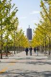 Asia China, Beijing, Garden Expo, Ginkgo Avenue, Yongding tower Stock Photos