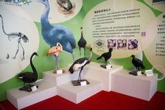 Asia China, Beijing, Garden Museum, bird eggs Exhibition Stock Image