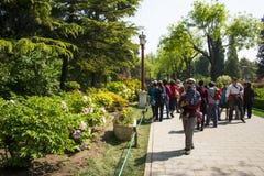 Asia China, Beijing, Jingshan Hill Park, spring garden landscape,Peony Festival Stock Photo