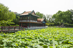 Asia China, Beijing, Longtan Lake Park, Summer landscape, Pavilion,green lotus pond Royalty Free Stock Images