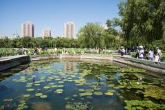In Asia, China, Beijing, lotus pond park,Lotus pond Stock Image