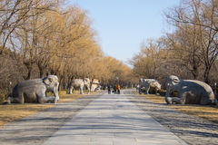 Asia China, Beijing, Ming Dynasty Tombs, scenic area, Road God stone carving,elephants, Stock Image