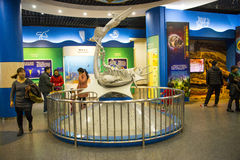 Asia, China, the Beijing Museum of Natural History, indoor exhibition hall Stock Images