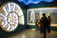 Asia, China, the Beijing Museum of Natural History, indoor exhibition hall Stock Photos