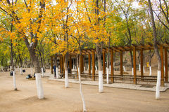 Asia China, Beijing, the north house, Forest Park, the autumn leaves, wooden pavilion Stock Photography