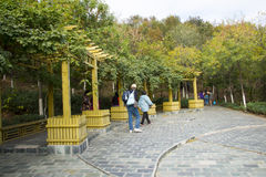 Asia China, Beijing, the north house, Forest Park, Wooden pavilion, autumn leaves Royalty Free Stock Images