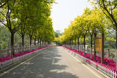Asia China, Beijing, North Palace Forest Park, garden landscape, highway, tree white wood fence,. Asia China, Beijing, Forest Park,, national Forest Park stock image