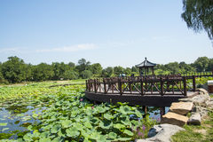 Asia China, Beijing, Old Summer Palace, lake landscape, lotus pond,wooden pavilion Royalty Free Stock Images