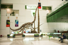 Asia China, Beijing, science and technology museum, dinosaur skeletons Stock Images