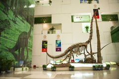 Asia China, Beijing, science and technology museum, dinosaur skeletons Royalty Free Stock Images