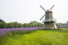 Asia, China, Beijing, shunyi flowers, port, garden landscape, windmills, Verbena bonariensis Royalty Free Stock Photo