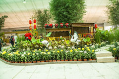 Asia China, Beijing, shunyi flowers port,indoor exhibition hall, chrysanthemum, house boats Royalty Free Stock Photos