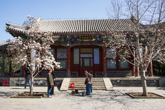 Asia China, Beijing, the Summer Palace, Spring scenery,classical architecture,Magnolia flowe Royalty Free Stock Images
