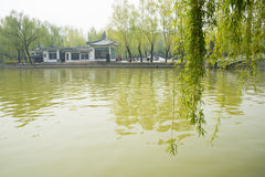 Asia China, Beijing, Youth Lake Park,spring scenery Royalty Free Stock Images