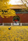 Asia China, Beijing, Zhongshan Park,Ancient architecture, ginkgo leaf. Asia China, Beijing, Zhongshan Park, The charming autumn scenery, ginkgo avenue Stock Images