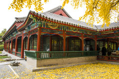 Asia China, Beijing, Zhongshan Park, ancient architecture, ginkgo tree Royalty Free Stock Photography