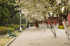 Asia China, Beijing, Zhongshan Park,Building and garden flowers Royalty Free Stock Images