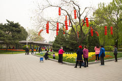 Asia China, Beijing, Zhongshan Park,The flower garden, tulip Stock Images