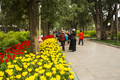 Asia China, Beijing, Zhongshan Park,The flower garden, tulip Royalty Free Stock Images
