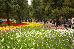 Asia China, Beijing, Zhongshan Park,The flower garden, tulip Stock Image