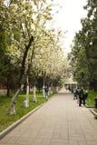 Asia China, Beijing, Zhongshan Park,The gardening landscape Stock Image