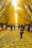 Asia China, Beijing, Zhongshan Park, Ginkgo Avenue Stock Photography
