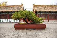Asia China, Beijing, Zhongshan Park, landscape flower pots. Royal garden, historical architecture, landscape, wood, flower pots stock photography