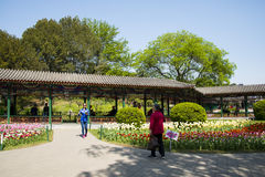 Asia China, Beijing, zhongshan park,Spring landscape,Promenade, tulips Stock Images