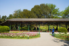 Asia China, Beijing, zhongshan park,Spring landscape,Promenade, tulips Royalty Free Stock Images