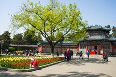 Asia China, Beijing, zhongshan park,Spring landscape,tulips Royalty Free Stock Image