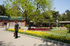 Asia China, Beijing, zhongshan park,Spring landscape,tulips Royalty Free Stock Images