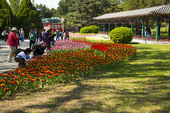 Asia China, Beijing, zhongshan park,Spring landscape,tulips Royalty Free Stock Photos