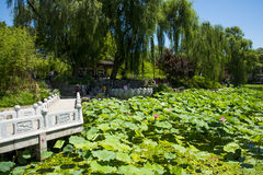 Asia China, Beijing, Zizhuyuan Park,Lotus pond in summer, Royalty Free Stock Images